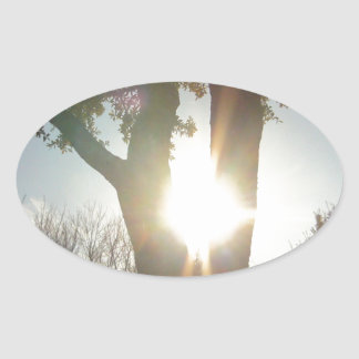 Sunshine Between Branches of a Tree Oval Sticker