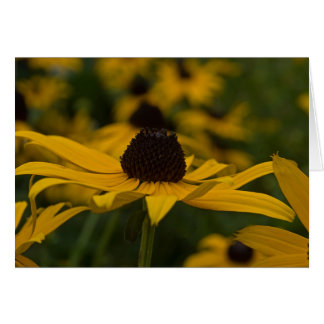 sunshine flower card