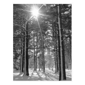 Sunshine in the Arboretum Postcard