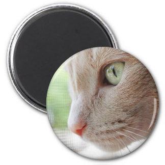 Sunshine Kitty 2 Inch Round Magnet