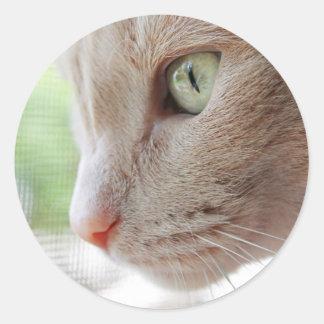 Sunshine Kitty Classic Round Sticker
