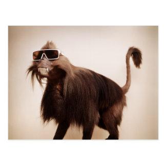 sunshine monkey postcard