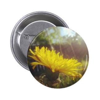 #sunshine #nature photography flower button