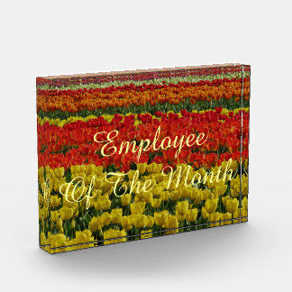 Sunshine Rainbow Tulips Award