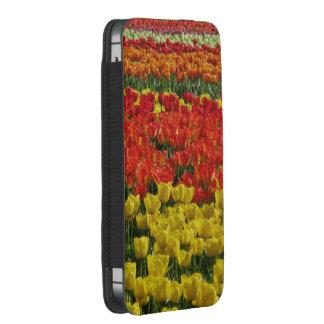 Sunshine Rainbow Tulips iPhone SE/5/5s/5c Pouch
