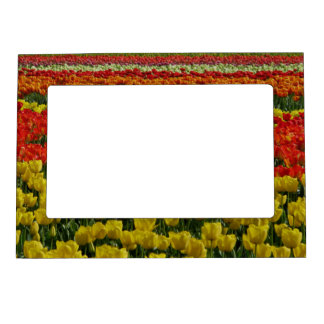 Sunshine Rainbow Tulips Magnetic Picture Frame