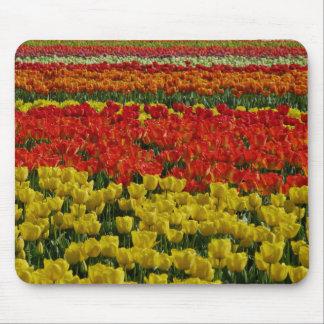 Sunshine Rainbow Tulips Mouse Pad