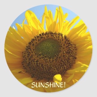 SUNSHINE SUNFLOWER STICKERS Summer Flowers