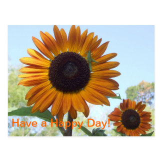 Sunshine Sunflowers : Have a Happy Day Postcard