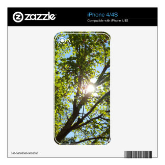 Sunshine Through Green Leaf Tree Decals For The iPhone 4