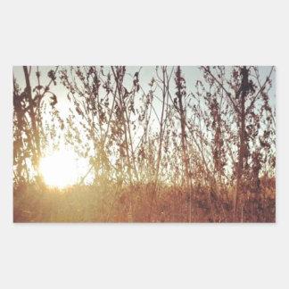Sunshine Through the Prairie Grasses Rectangular Sticker