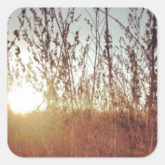 Sunshine Through the Prairie Grasses Square Sticker