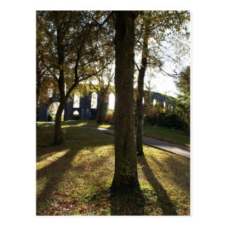 Sunshine through trees in Scotland Postcard