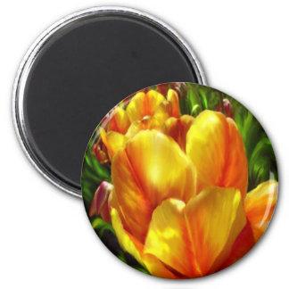 sunshine tulip magnet