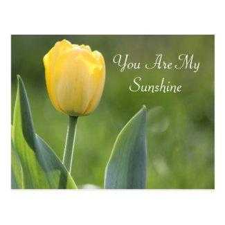 Sunshine Tulip Photography Postcard