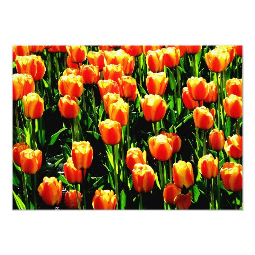 Sunshine Tulips 5x7 Paper Invitation Card