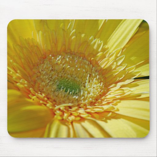 Sunshine Yellow Gerbera Daisy Mouse Pad