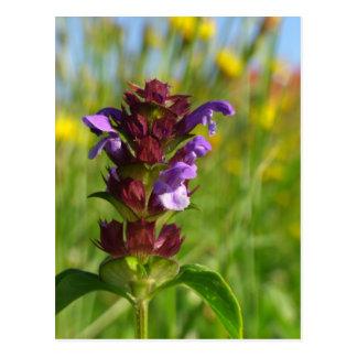 Sunshiny day - lila flower postcards
