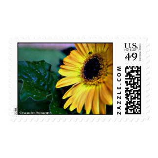 Sunshiny Gerbera - Postage, medium Postage