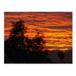 SunSuzi Designs -  Arizona Sunset Postcard