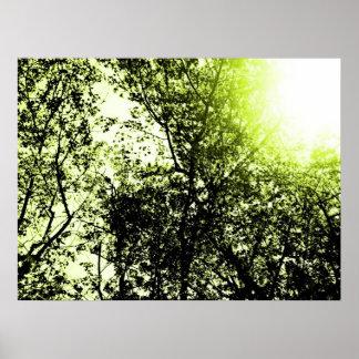 SunTrees Print