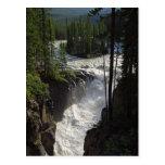 Sunwapta Falls en parque nacional de jaspe Tarjeta Postal
