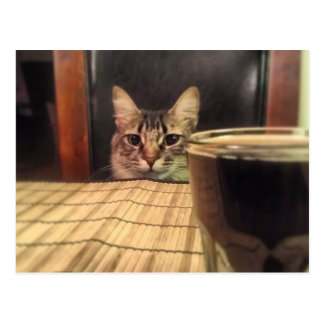 Sup Beer? Funny Humor Kitty Cat Photo Photography Postcard