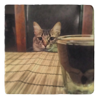 Sup Beer? Funny Humor Kitty Cat Photo Photography Trivet