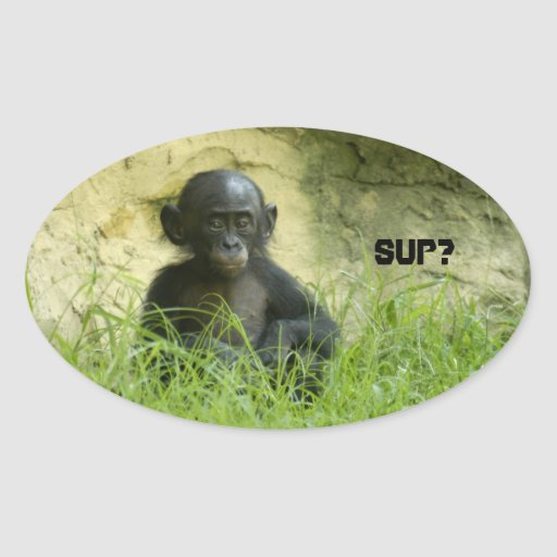 Sup? DArcy Evans Photo Oval Sticker
