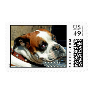 'Sup, Dawg? Postage