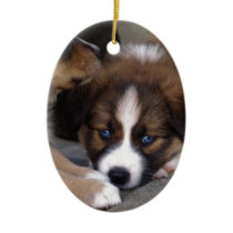 Super Cute Australian Shepherd Puppy Ceramic Ornament