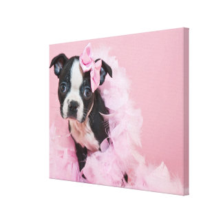 Super Cute Boston Terrier Puppy Wearing A Boa Canvas Print