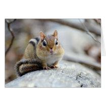 Super Cute Chipmunk