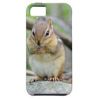 Super Cute Chipmunk Posing Sweetly iPhone SE/5/5s Case