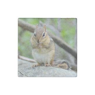 Super Cute Chipmunk Posing Sweetly Stone Magnet