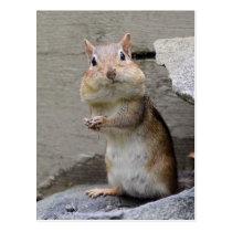 Super Cute Curious Chipmunk Postcard