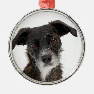 Super Cute Dog in Snow. Metal Ornament