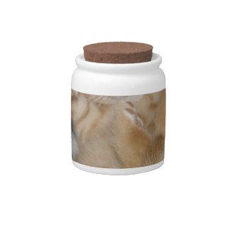 Super Cute Ginger Sleeping Kitten Candy Jar