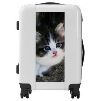 SUPER CUTE Kitten Portrait Photograph Luggage