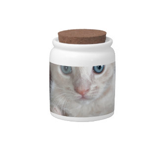 Super Cute Kitten with Beautiful Eyes Candy Jar