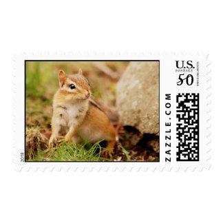 Super Cute Little Baby Chipmunk Postage