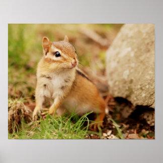 Super Cute Little Baby Chipmunk Poster