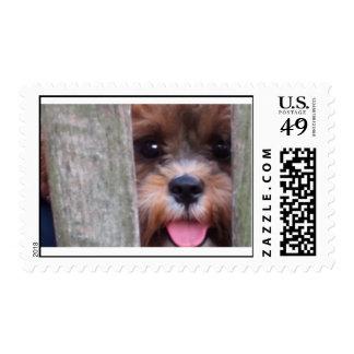 Super Cute Stamps