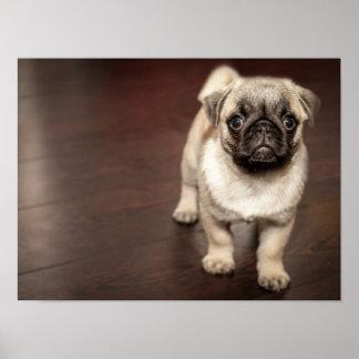 Super Cute Pug Poster