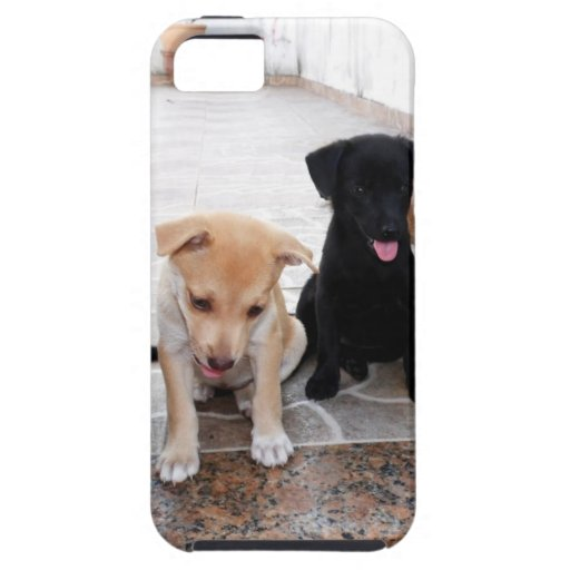 Super Cute Puppies Photo iPhone 5/5S Cases
