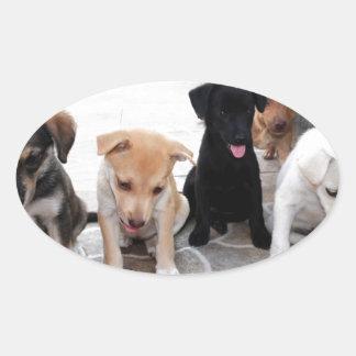 Super Cute Puppies Photo Oval Sticker