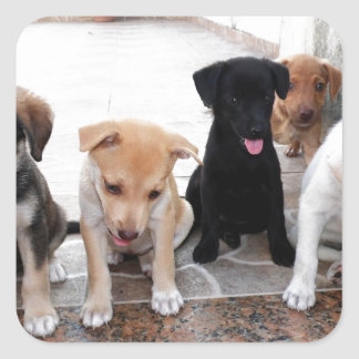 Super Cute Puppies Photo Square Sticker