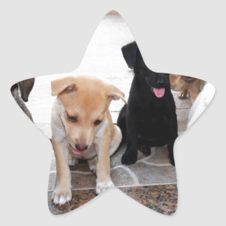 Super Cute Puppies Photo Star Sticker