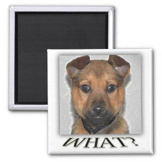 Super cute puppy magnet