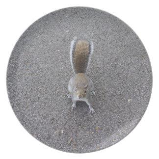Super cute squirrel melamine plate